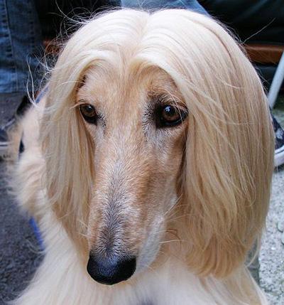 собаки фото русская борзая