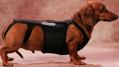 Боли в спине у собак