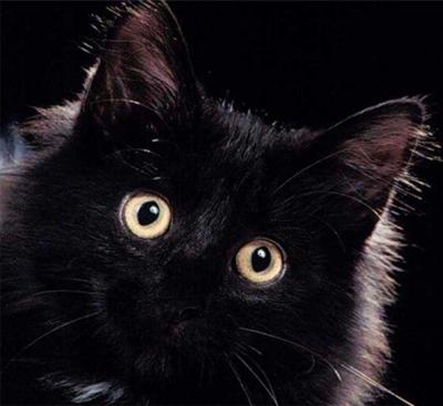 Глаза кошки — знакомства домашних