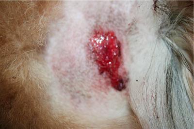Дерматоз  лечение симптомы фото