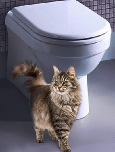 кошка и унитаз