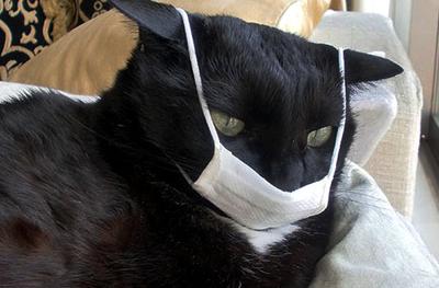знакомства вич Кошки