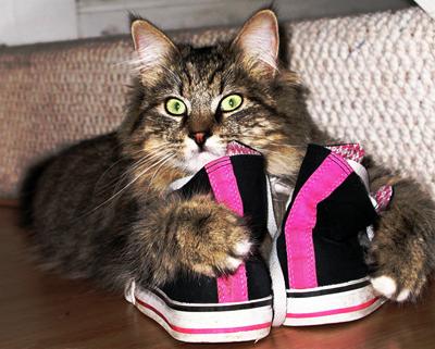 Как сделать так чтобы кошка меня любила