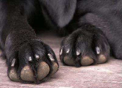 фото лапы собаки