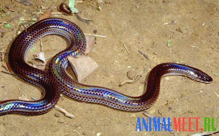 змей 24 знакомства bb