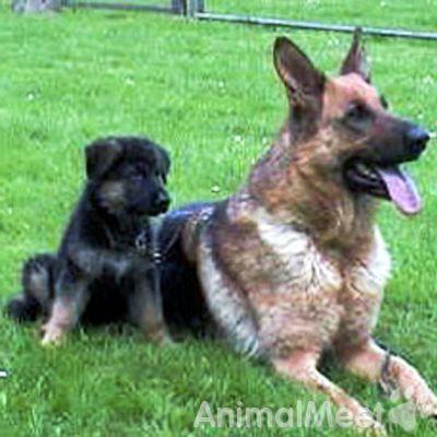 собаки знакомства и сайт