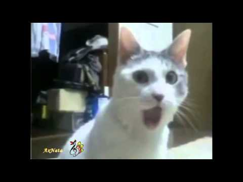 Забавные И Смешные Кошки. Коты Веселятся