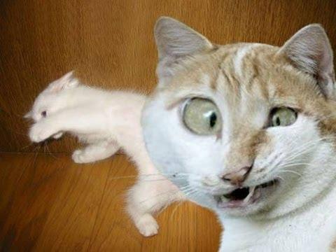 Видео про кошек фото 226-922
