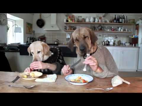 Три собаки за столом
