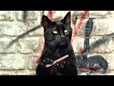 http://www.animalmeet.ru/upload/video/thumbs/medium/youtube_eac03303ac2334adb420e98cbde693060.jpg